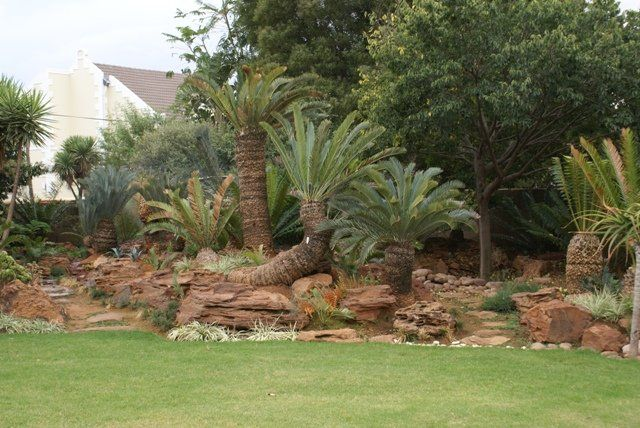 17 best images about cycads on pinterest gardens for Garden design ideas in zimbabwe
