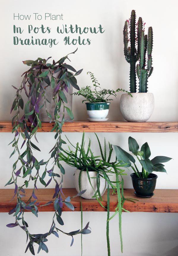 Links staat een 'wandering jew' - potplant/hangplant - ideaal voor op kasten of hangend - paarsgroen blad - Water: medium - Licht: veel/medium