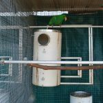 Red wings, king parrots, alexandrines, red sided parrots and similar sized birds. Bird breeding nest box comes with optional ventilation on the lid. Birds Hole: 75mm, 90mm, 100mm. 500mm in Height and 225mm in Diameter. Inspection Hole 120mm.