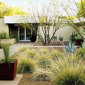 Replace the lawn with drought-tolerant grasses, then add young trees and a paved area beside the front door.