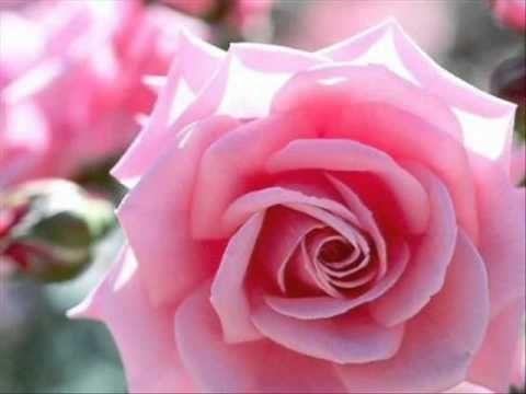 """Rosas y bellas Flores """" Lindas imágenes de fantasía y mas para compartir """" - YouTube"""