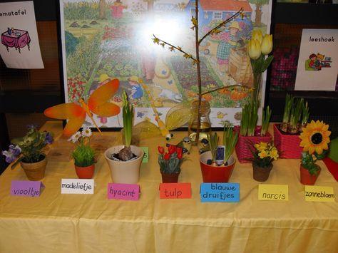 Lente - Groeien en bloeien - Juf Leonie Thematafel Er staan verschillende echte en nep bloemen op de tafel. Bij alle bloemen staan naambordjes in de kleur van de bloem.