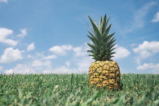 Ananas, Sur Le Terrain, Hospitalité