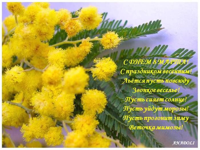 84465778_8_marta_mimoza.jpg (700×525)