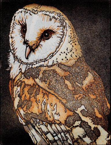Barn Owl by Mike Smith. Linocut.