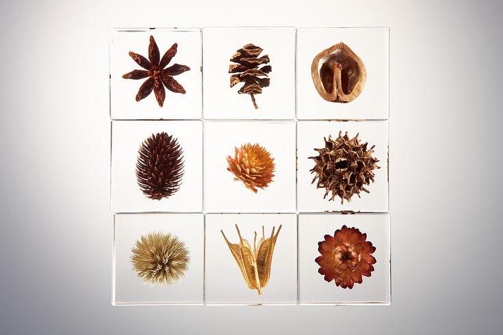 Concept | sola cube | ウサギノネドコ - Concept - 植物の美しいかたち  生命誕生から38億年。 植物はその命を未来へつなぐため、花を、果実を、そして種子をつくりあげてきました。 ただ生きぬくために削ぎ落されたその規則的でストイックなフォルムは、自然が生み出した究極の機能美と言えるでしょう。 その美しい瞬間をとらえて、4cm角の透明のアクリルキューブに封入。 子供にとっては、知性と感性を刺激する立体図鑑として。 大人にとっては、生活を彩るインテリアやギフトとして。 どの世代の方にもお楽しみいただけるプロダクトです。