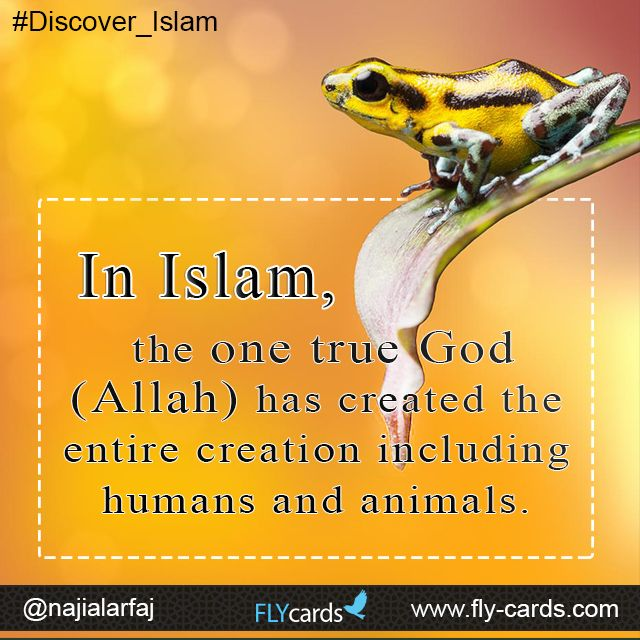 In #Islam , the one true #God ( #Allah ) has created the entire creation including #humans and animals.   fly-cards.com