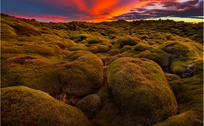 1-You will be on an island which is mostly covered in lava! Of course, today the lava is covered in thick moss and is the pride of all the Icelanders. Since it takes a long time to grow back once the moss is destroyed, you shouldn't lay on it, but instead handle it with care. Still, it is one of the most beautiful landscapes ad absolutely worth visiting.