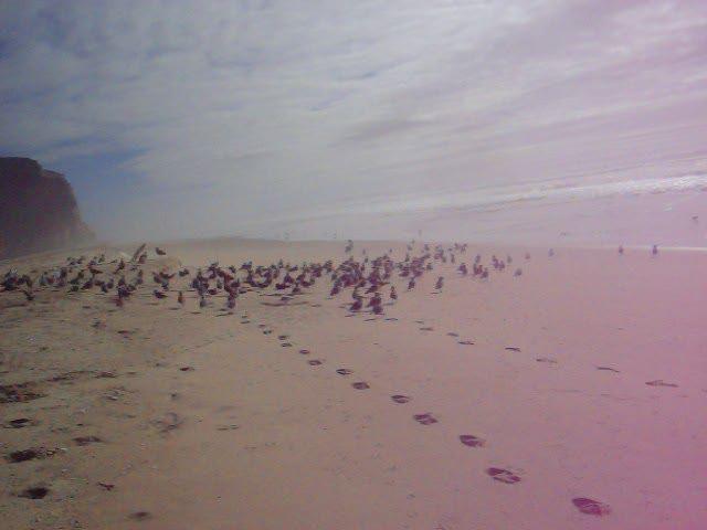 https://flic.kr/p/gEdUtE | All-Out Killer Bird Attack!! | San Gregorio Attack of the Birds