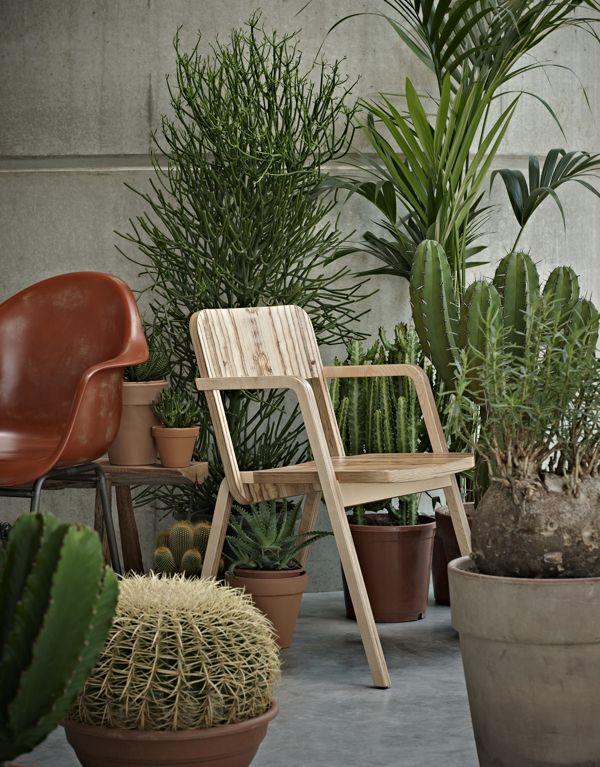 cactus interior by arjan benning