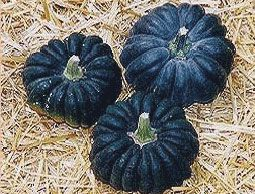 """Good list of """"boutique pumpkins.""""  Pictured is Black Futsu, which has a compact vine."""