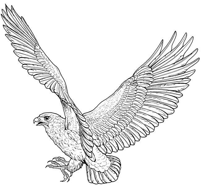 One example of a free coloring page from Dover
