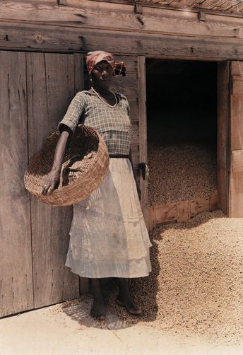 Jamaican woman with drying coffee beans