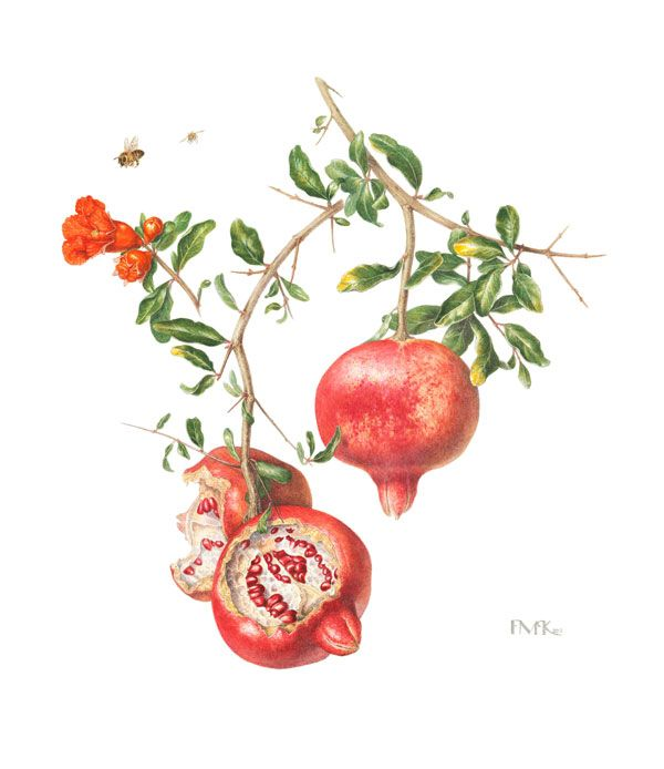 Fiona McKinnon Pomegranate
