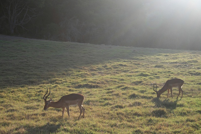 Bambi moment by Jessolomew, via Flickr