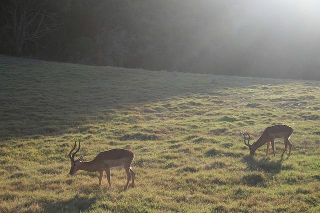 Bambi moment by Jessolomew, via Flickr