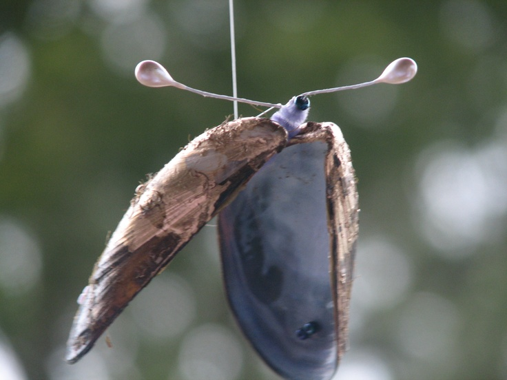 I created this mussel butterfly as part of my wedding theme.Easy to create: a clean mussel shell,spray painted gold,for the body I used pipe cleaner and beaded wire thread for the antenna