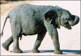 Improve Yourself Daily : Story: The Elephant Mindset