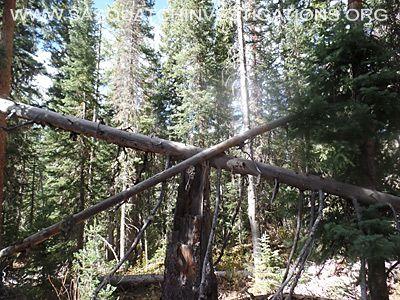 Bigfoot Tree Structures 11-11-15 1