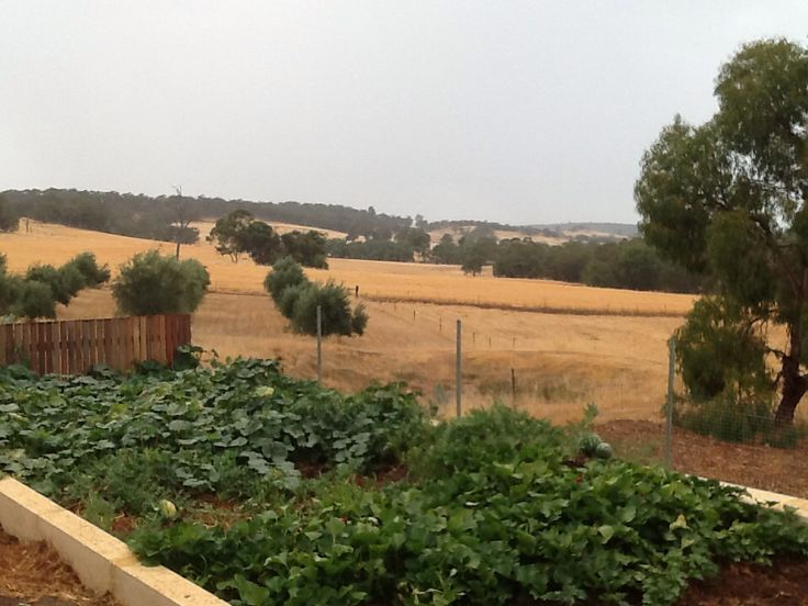 Summer rain, melon patch, olive grove, paddocks