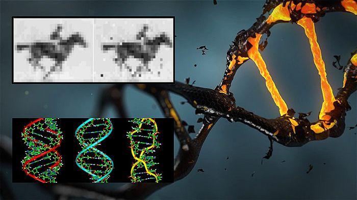 El Instituto Wyss de Ingeniería Biológicamente Inspirada de la Universidad de Harvard ha logrado insertar mediante la técnica CRISPR, im...