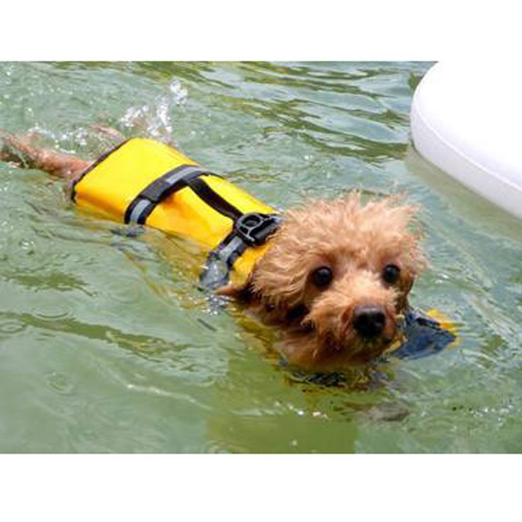 Clothes For Dogs Pet Dog Save Life Jacket Safety Clothes Life Vest Dog Clothes Summer Swimwear Drop Shipping // Worldwide FREE Shipping //     #dogs