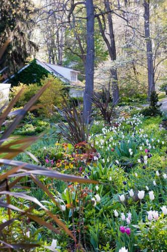 76 Best Woodland Images On Pinterest Garden Plants Shrubs And - woodland garden design books
