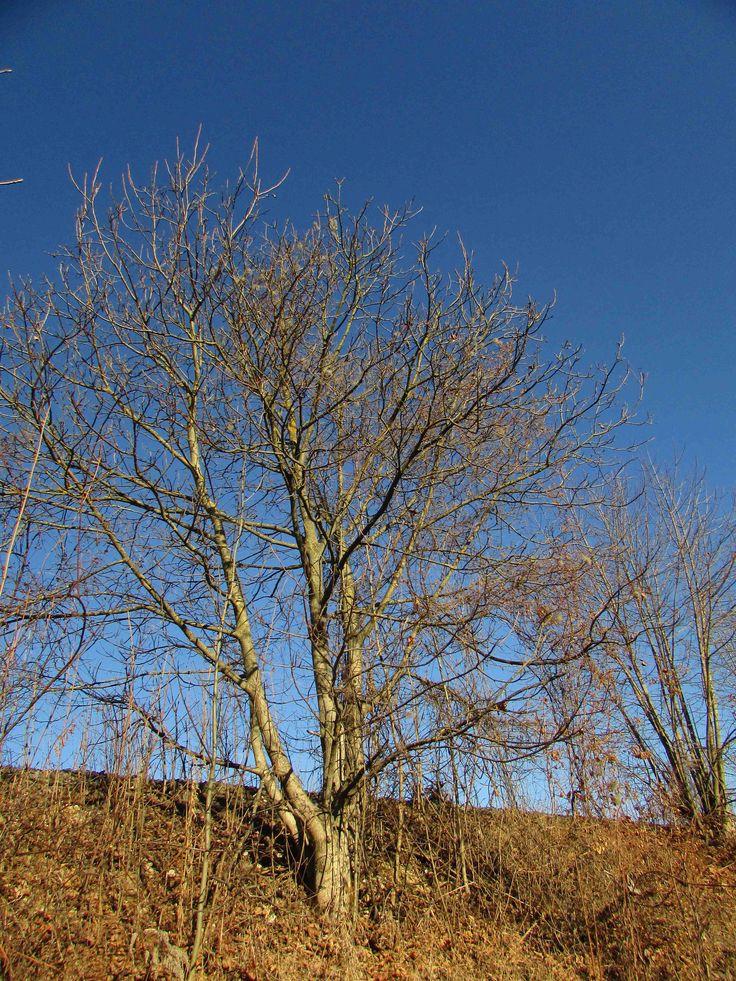 Strom v úbočí...
