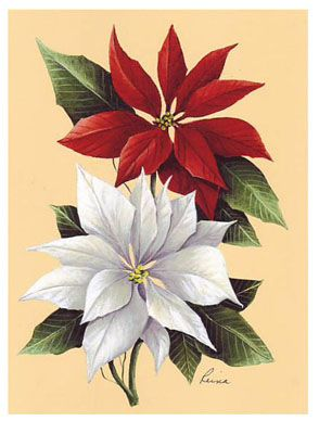 Poinsettia (*)                                                                                                                                                                                 More