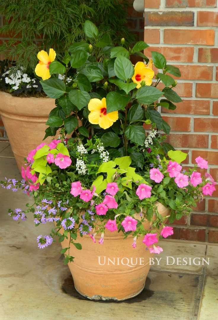 17 Best images about Container Garden Ideas on Pinterest ...