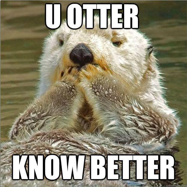 Upset otter memes | quickmeme