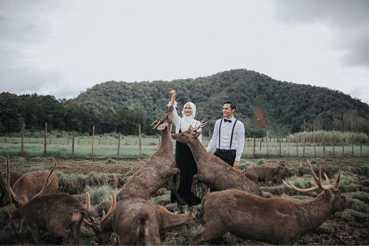"""86 Likes, 3 Comments - Annisa Wulandari (@nsaannisa) on Instagram: """"Deer #nisafauzanstory"""""""