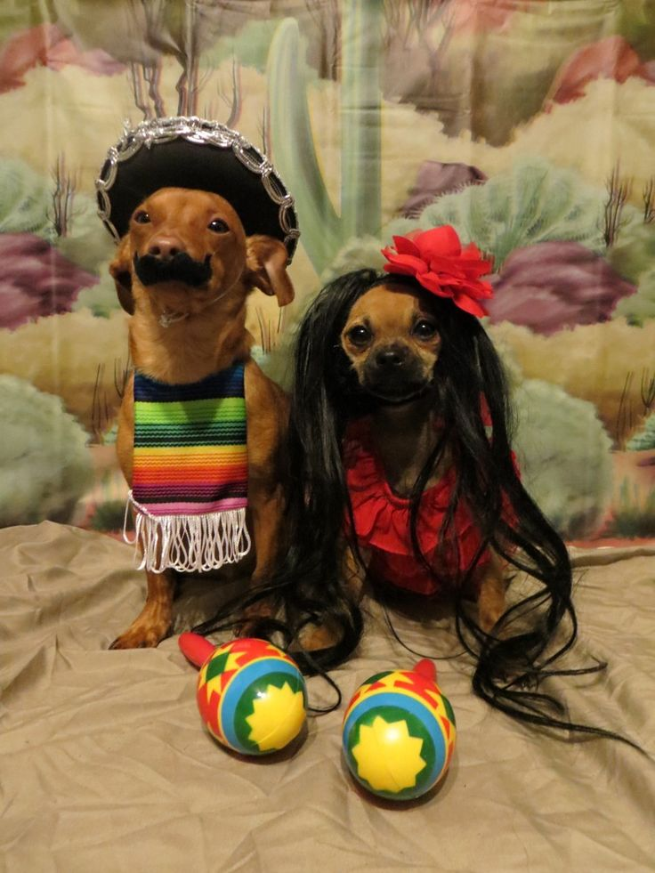 Amazing Pet Halloween Costume Ideas.