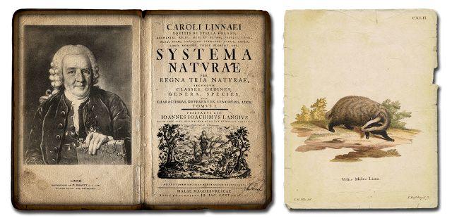 Systema Naturae (Carl von Linné) (le Système de la nature ...