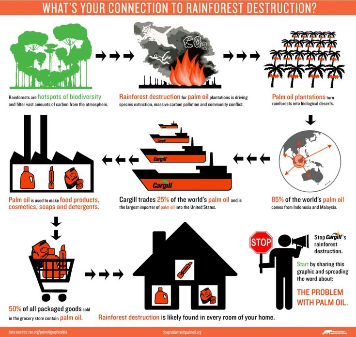 What's Your Connection to Rainforest Destruction?