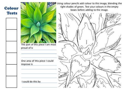 Cactus/Succulent Colouring Sheet with Evaluation. (This would be a nice jumping off point for how to color their Rodeo work.)