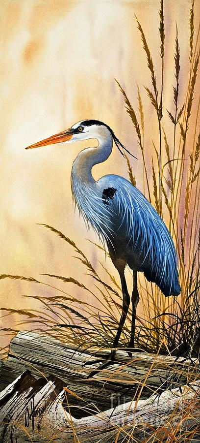 """""""Bright Shore"""" by James Williamson  (Blue Heron Painting)"""