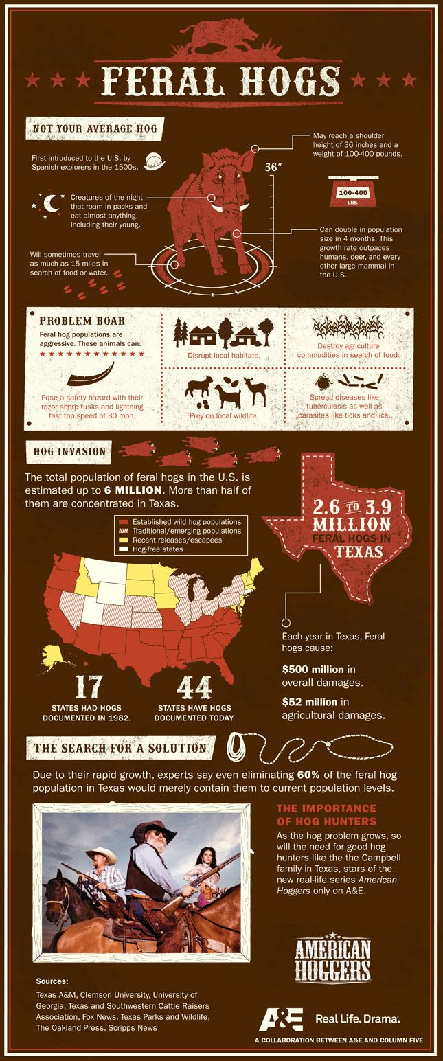 "Feral Hogs Infographic-Cool facts for those of you who think we shouldn't ""control the population"" with hunting!"