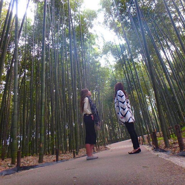 【kita.haru】さんのInstagramをピンしています。 《. . . 1泊2日の温泉旅行♨✨ 2日目はSNOOPY茶屋🍵☞ 竹林🌲 SNOOPY本間に可愛すぎて食べるの勿体ないくらいやった😂💓 竹林は初日行こうと思ってて場所分からんくて断念してたけどよーやく行けた💃💜 1泊2日って一瞬過ぎて滋賀帰ってきて一気に現実に戻った😔💧 月1で旅行行きたいなぁ~~🙄👐🏽♥️ 菫2日間ありがとう😳💛 まだ一緒に居てるけど😛😛😛 . . . #京都 #Kyoto #嵐山 #森林 #arabicacoffee  #スヌーピーカフェ #茶屋 #OLIMPUS #tg870  #tg870のある生活  #instagram #instafashion  #instapic #instagood  #l4l #like4like #followme #フェンダー越しの私の世界  #カメラ女子 #BFF #高身長女子  #お洒落な人と繋がりたい》