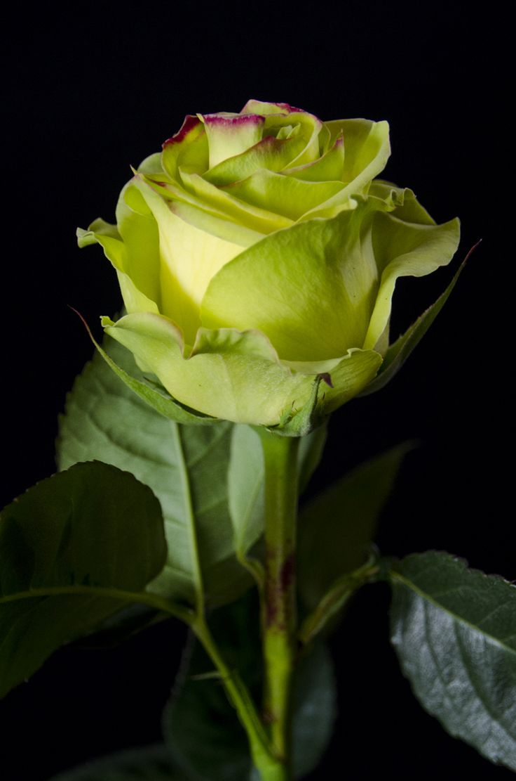 60 best Flowers images on Pinterest   Flower arrangements, Types of ...