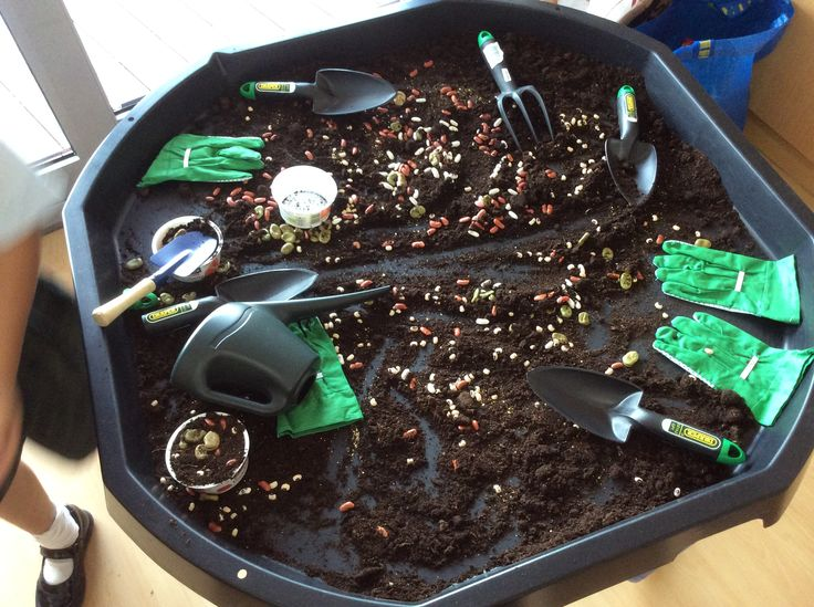 Jack and the Beanstalk seeds and beans investigation tray EYFS