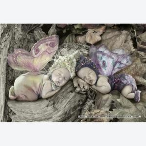 Believe in fairies!Geddes Bears, Anne Geddes, Baby Auguste, Fairies Fantasy, Fairies Charms, Baby 33, Accepted Baby, Fairies Tales, Baby Butterflies