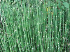 人気の下草 - 庭木で開運 自分でできる簡単な剪定