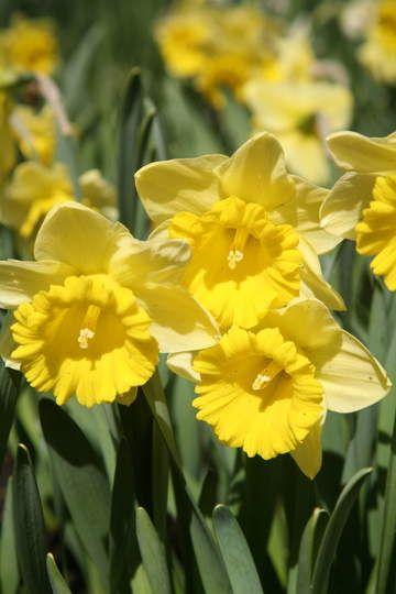 28++ Gelbe pflanzen im fruehling 2021 ideen