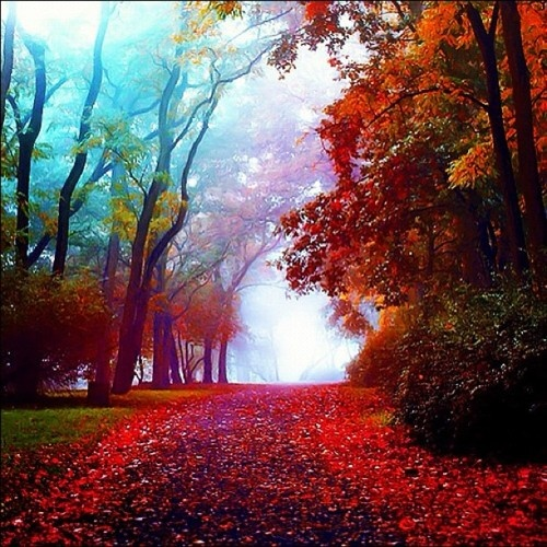 fall: Fall Leaves, Paths, Walks, Autumn, Color, Quote, Rainbows, Beautiful, Trees