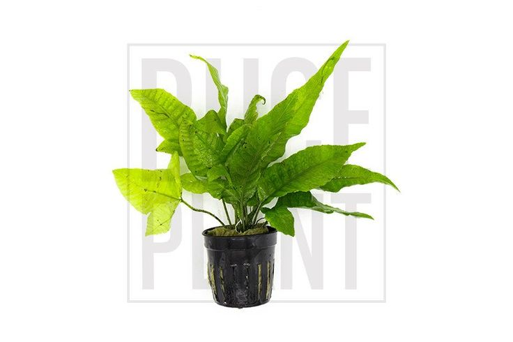 25 best ideas about low light plants on pinterest indoor house plants inside plants and low - Easy maintenance indoor plants ...