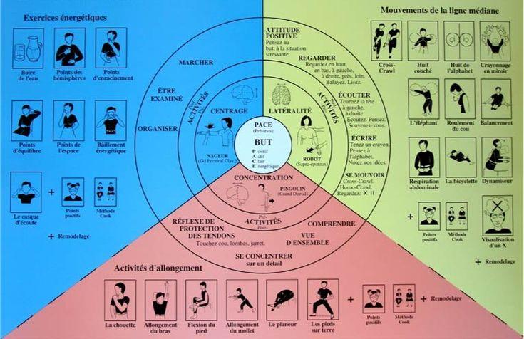 La kinésiologie pédagogique : Fiche technique