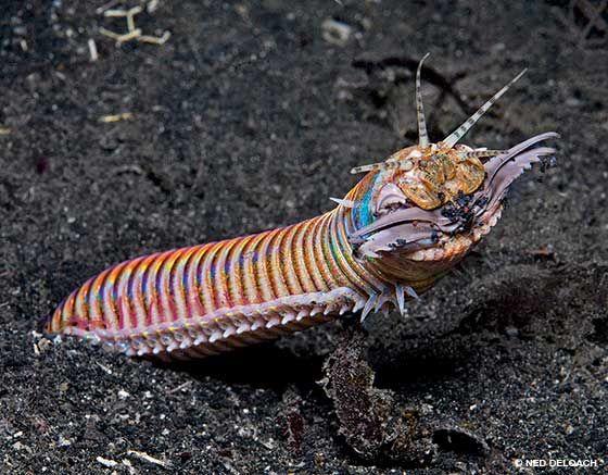 01-bobbit-worm