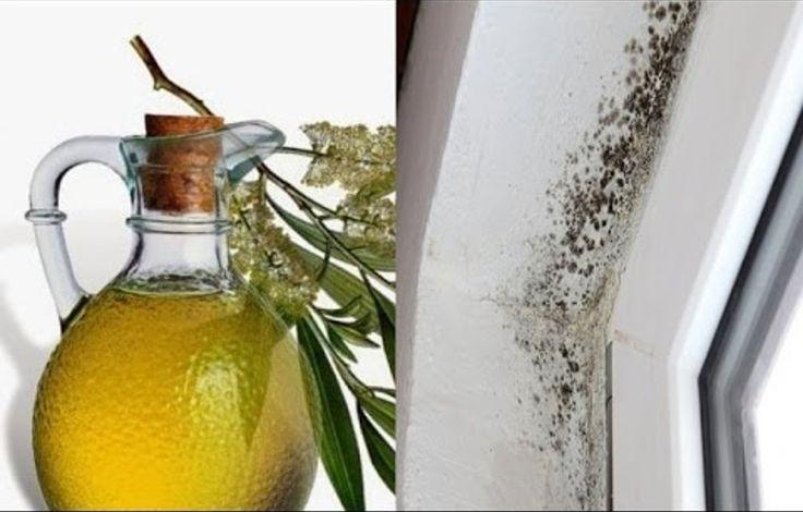 Jeśli borykaliście się już z problemami z pleśnią w domu, wiecie zapewne, jak szkodliwa jest ona dla zdrowia, a zarazem trudna do usunięcia.Na szczęście, istnieje proste i efektywne rozwiązanie tego nieprzyjemnego problemu.Poniższy spray zawiera tylko jeden składnik, wywodzący się z Australii olejek z drzewa herbacianego.Choć przez wieki był on używany przez Aborygenów jako środek łagodzący ból i pomagający leczyć rany, ówcześni ludzie nie zdawali sobie sprawy, że olejek herbaciany ma w…