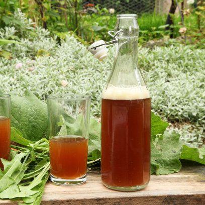 Dandelion and burdock beer recipe, from 'River Cottage Handbook: Booze'